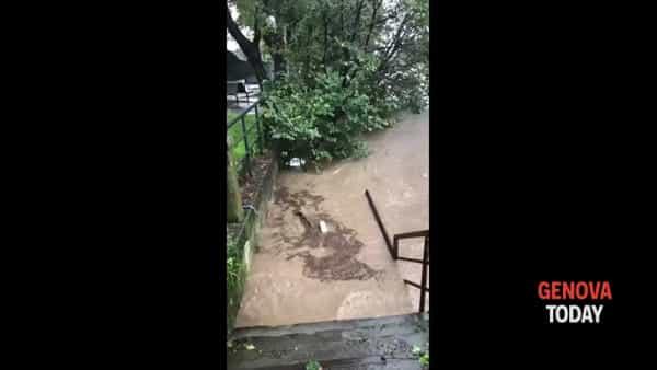Torrenti in piena a Chiavari e Sestri Levante. Video