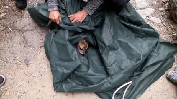 Cucciolo di capriolo cade in un tombino, salvato dalle guardie zoofile | Video