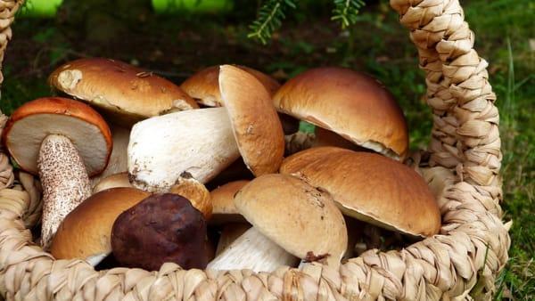 Funghi al funghetto, un grande classico autunnale genovese