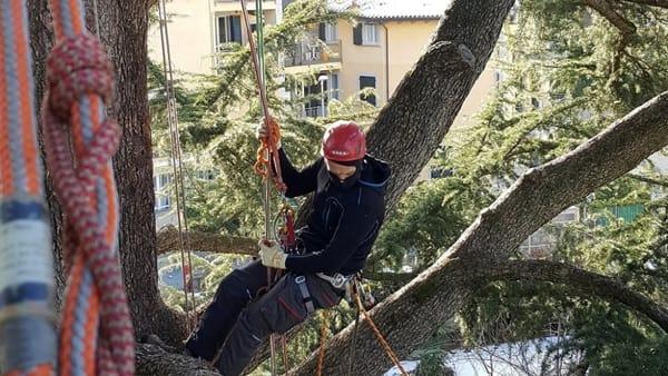 Corso di tree climbing a Voltri