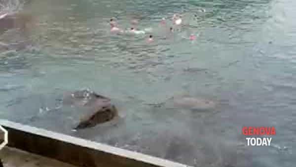 """Cimento a Boccadasse, il maltempo non ferma i """"Nuotatori del tempo avverso"""". Video"""