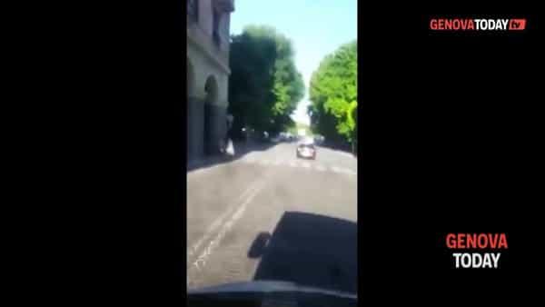 VIDEO | Savona, un canguro a spasso per le strade del centro