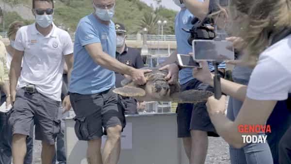 VIDEO | Rilasciate in mare due tartarughe, curate all'acquario