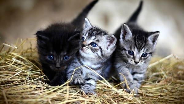 Raccolta alimentare per le piccole colonie feline e i randagi di Genova